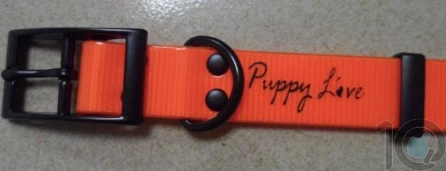 Puppy Love - TPU Coated Nylon Webbing Pet Collars - Fluorescent Orange - Large